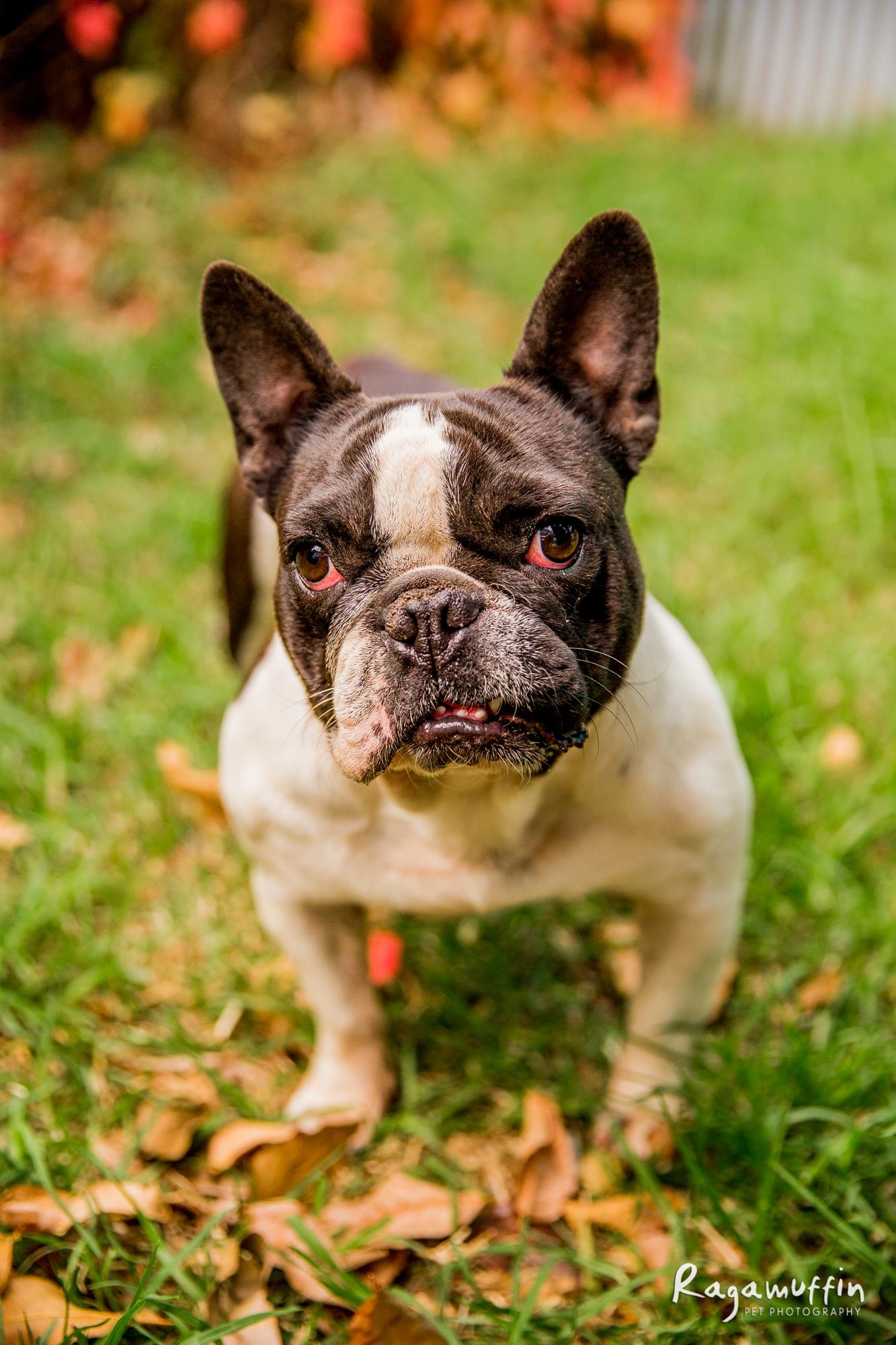 pug-rescue_04-18(0068)-web