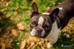 pug-rescue_04-18(0056)-web