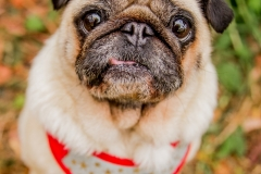 pug-rescue(043)-03_18_ragamuffin-webRESIZE