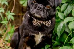 pug-rescue(028)-03_18_ragamuffin-webRESIZE